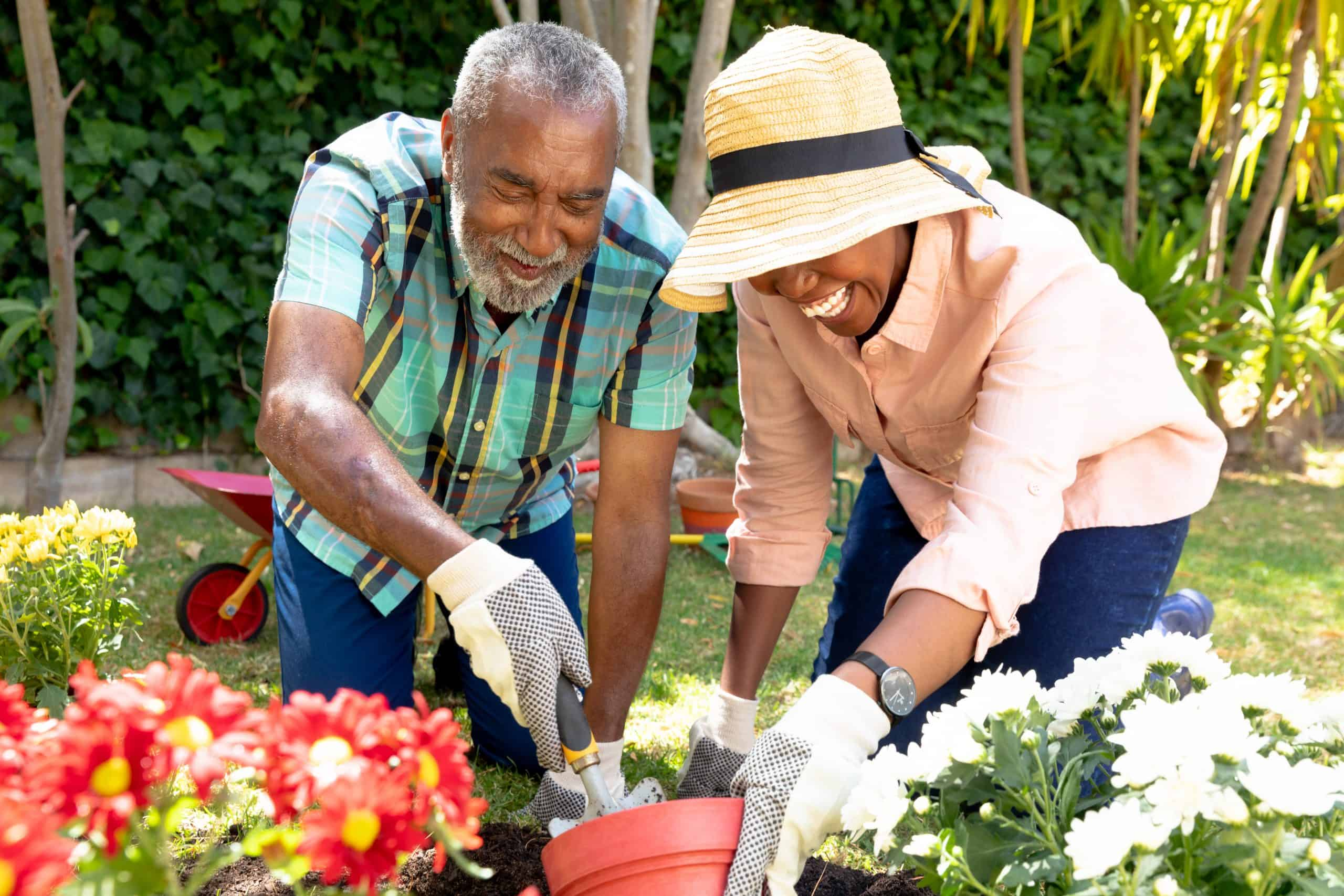 Senior couple spending time in their garden on a sunny day, planting flowers.